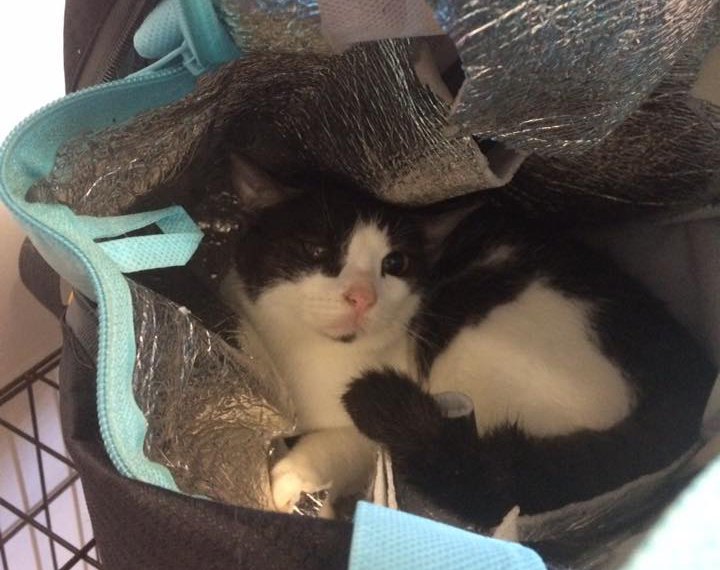 This was the sight that greeted veterinarian Christine Burke when she opened the insulated bag left outside the vet.