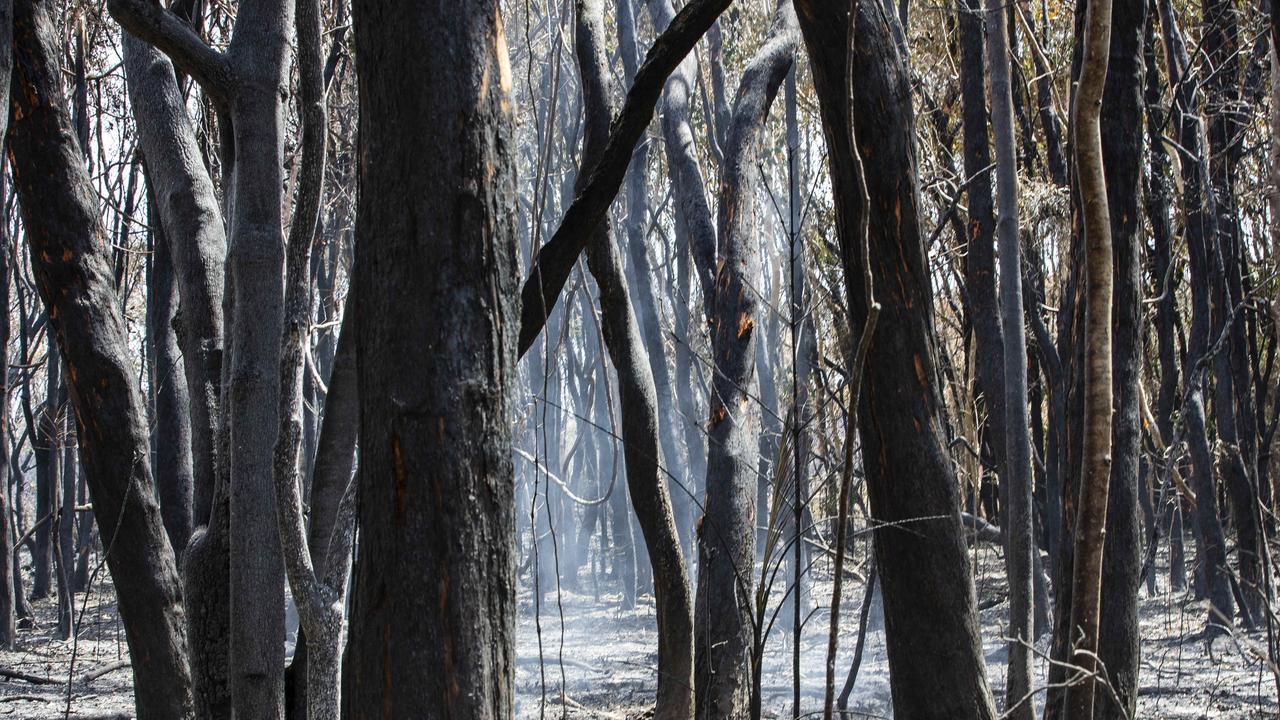 Aftermath of the bushfires at Peregian Beach. Photo Lachie Millard