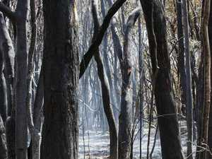 Fire boss says humidity to change risk level