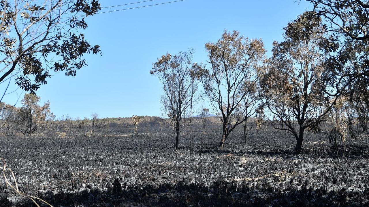 Blackened landscape at Peregian after a bushfire. Photo: John McCutcheon / Sunshine Coast Daily