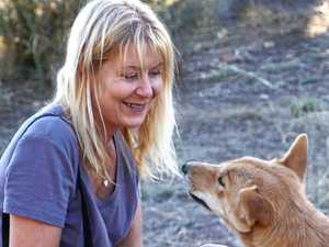 STOP BAITING: World dingo campaign's Rainbow Beach link