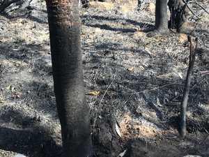Photo reveals devastating loss after Valley bushfires