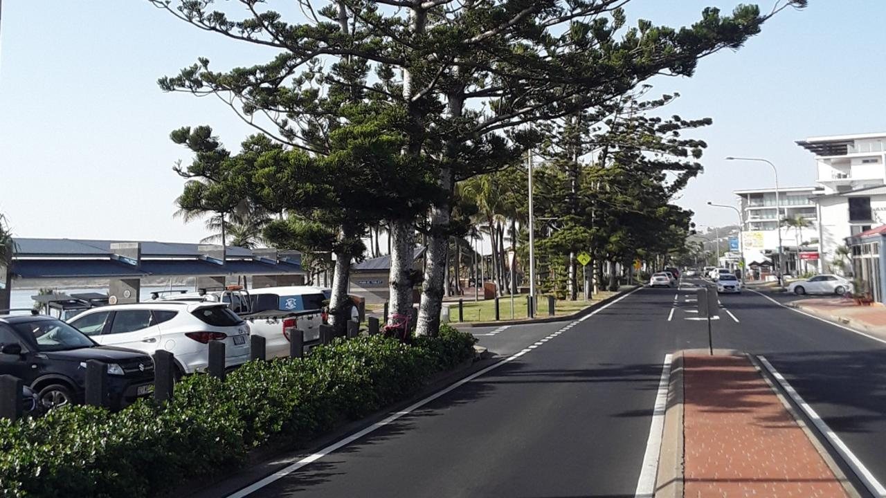 Council prepares to remove two hoop pines said to be a public danger