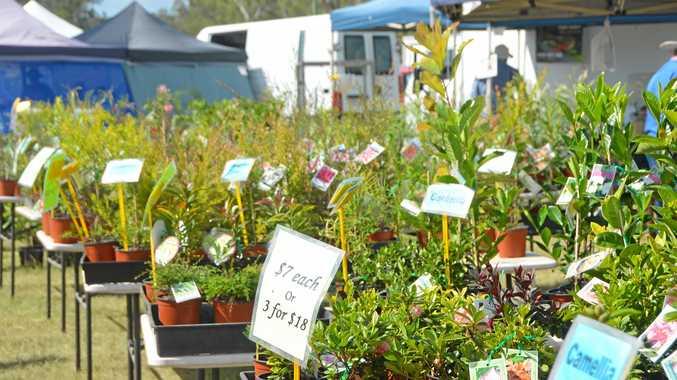 The best Burnett plants to feature in Garden Expo