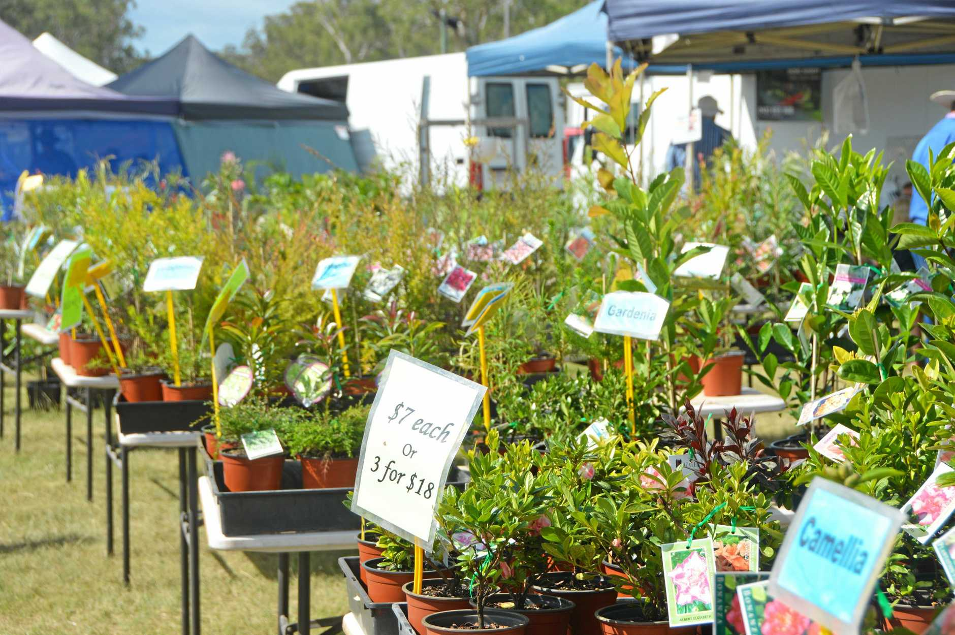 The display at the Autumn Wondai Garden Expo earlier this year.