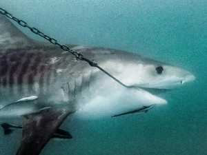 OPINION: Open season for sharks in Whitsundays