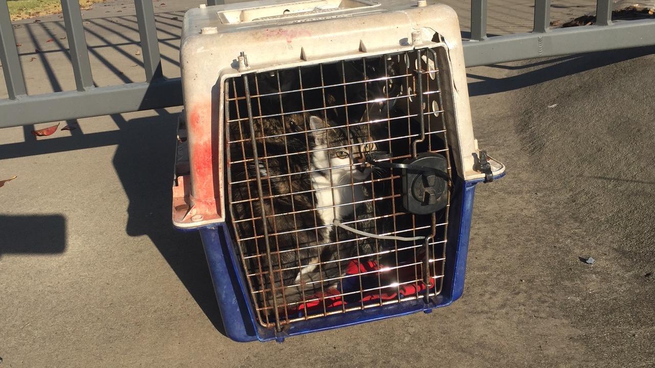 Five kittens were dumped outside the Mackay RSPCA this week.