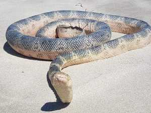 Deadly snakes spotted on family beach
