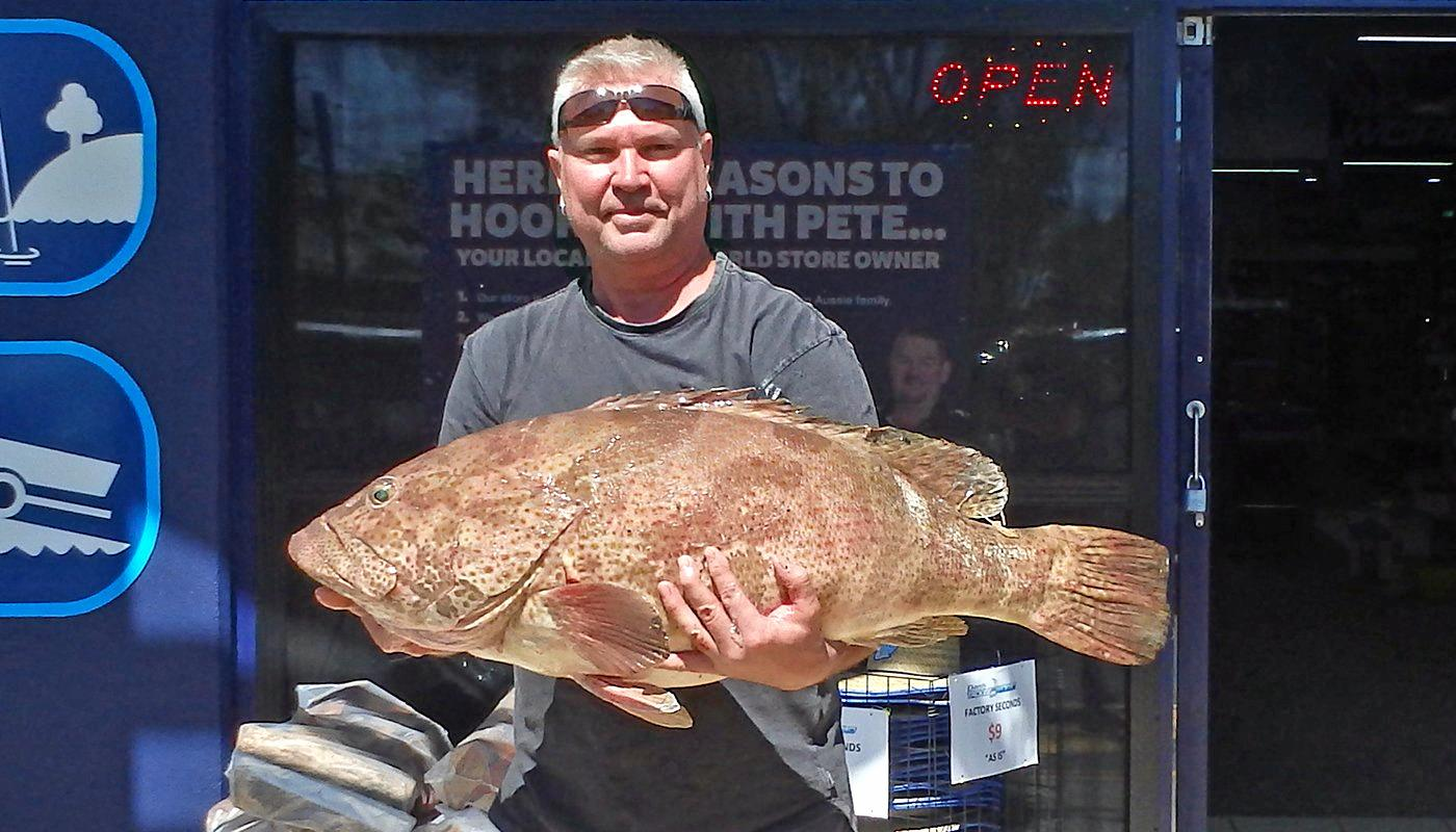 GREAT TRIP: Jason Below boated this gold spot cod at North Reef while on a five-hour Cougar One charter.