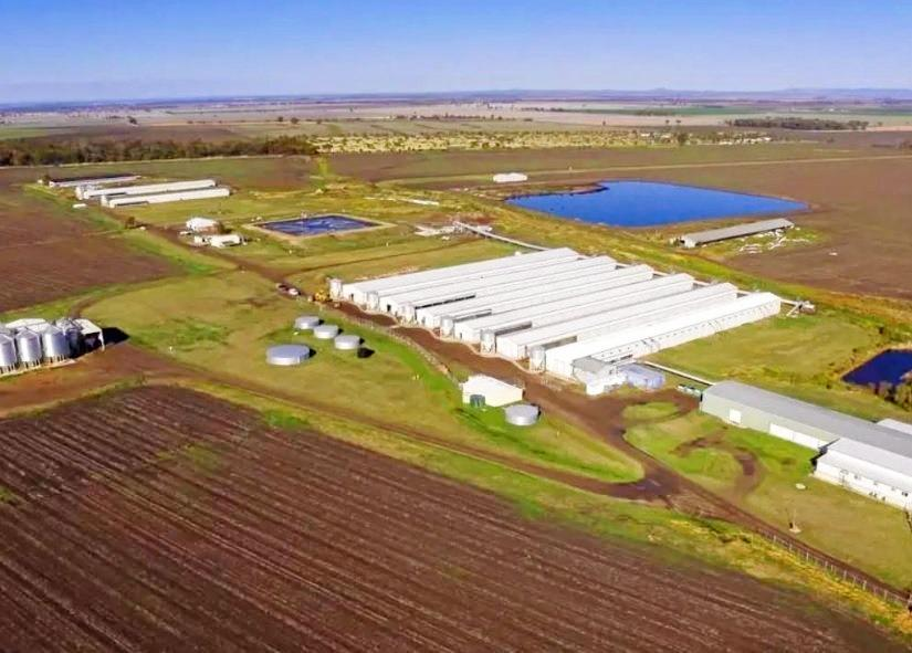 EGG-PANSION: Pride Farm Foods asked Toowoomba Regional Council to extend the deadline for its Pittsworth egg farm development.
