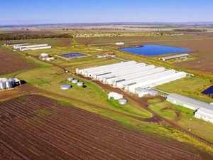 Egg-onomic downturn delays poultry farm expansion