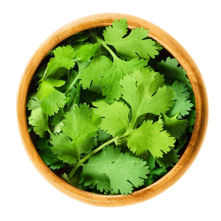 Fresh coriander leaves, also known as cilantro is an edible herb.