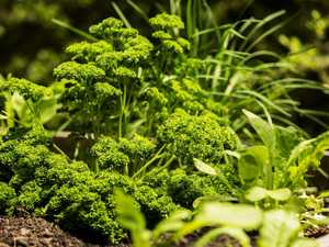 Best 8 herbs and veggies to plant during spring