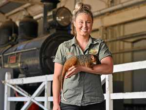 Rail museum takes a walk on wild side these school holidays