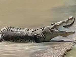 Amazing images: Croc makes meal out of jumping fish