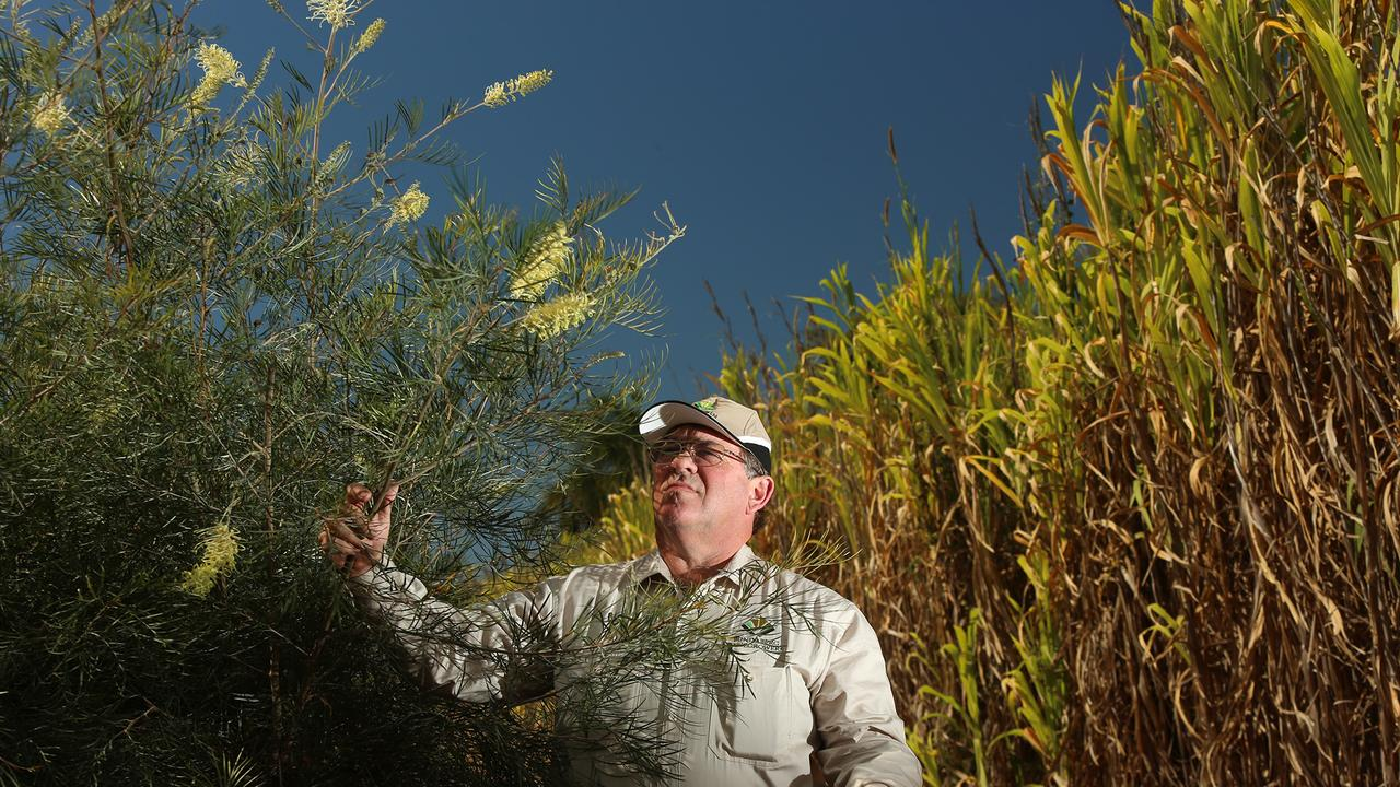 Bundaberg Canegrowers manager and wildflower grower Dale Holliss. PIC: Vanessa Hunter for The Australian