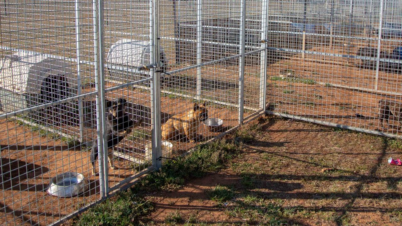 Investigators uncovered an unlicensed 'puppy farm' on the property.