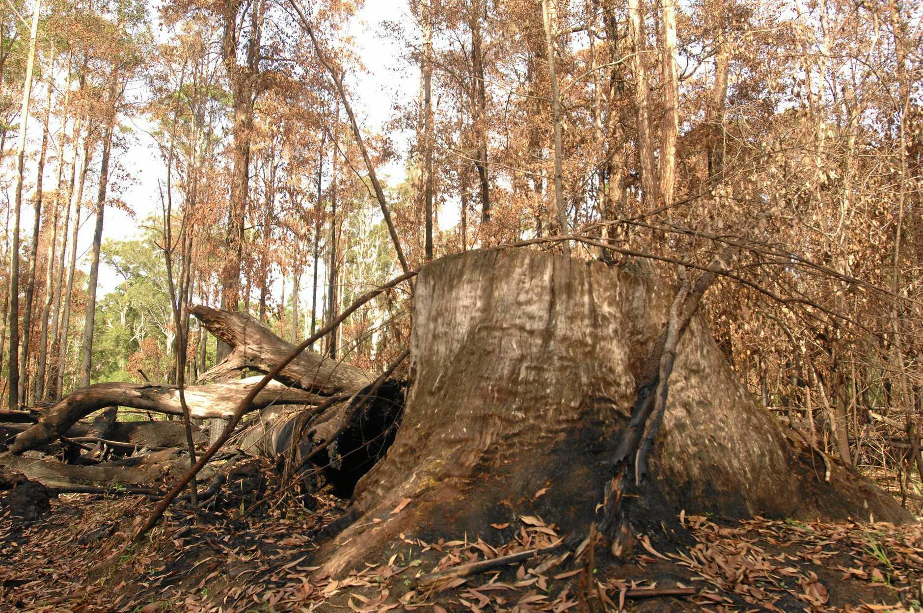 Conservation groups are urging a rethink on native forest logging.