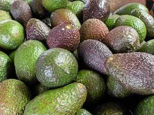Avo go: 50 per cent of stallholder's produce ripped off
