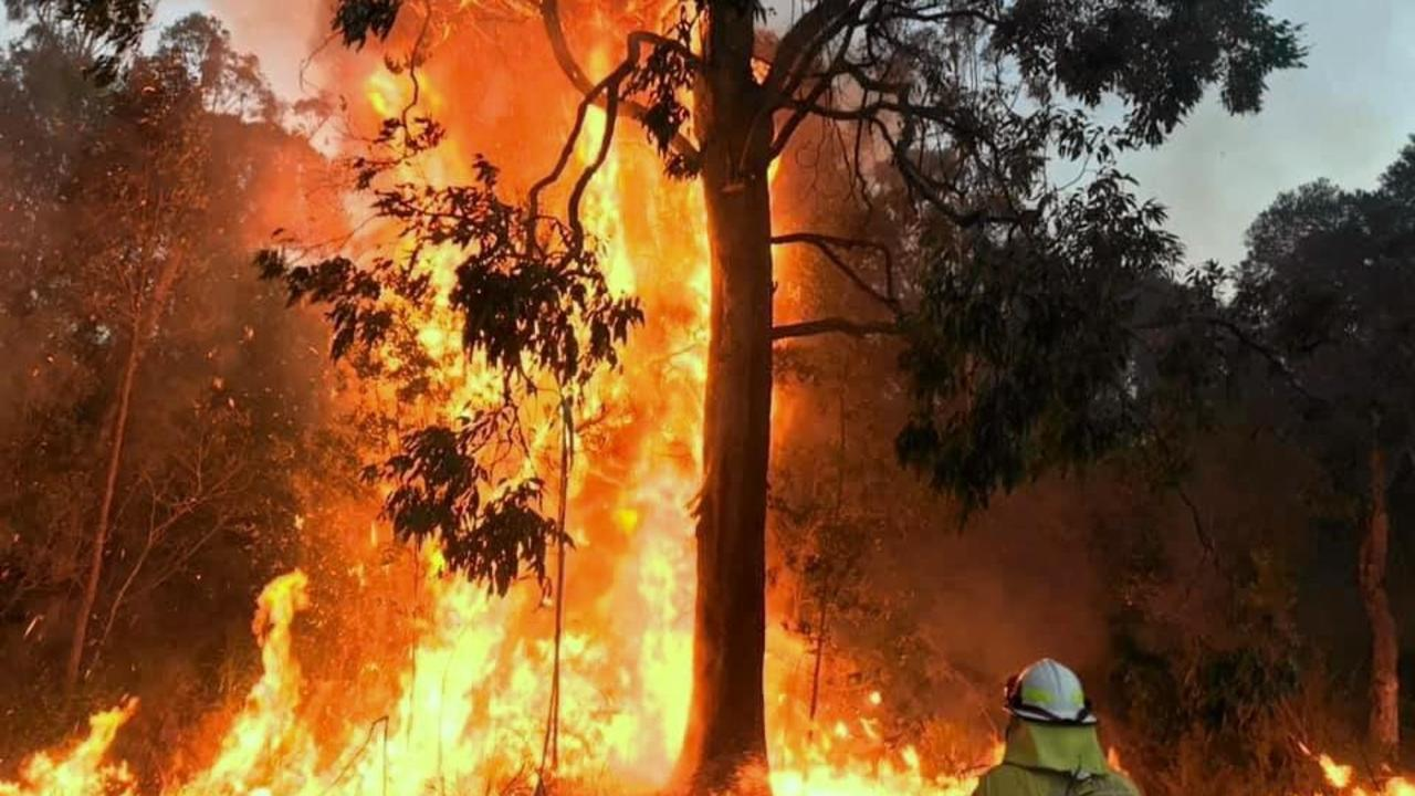 The Bees Nest fire is likely to link up with two other major blazes to the north.