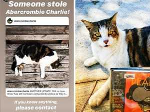 Insta-famous cat stolen by Uber passengers
