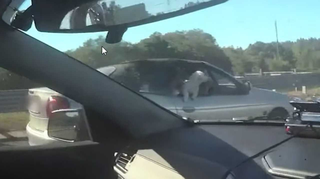 A woman was caught driving with two dogs free in her car. Picture: Queensland Police