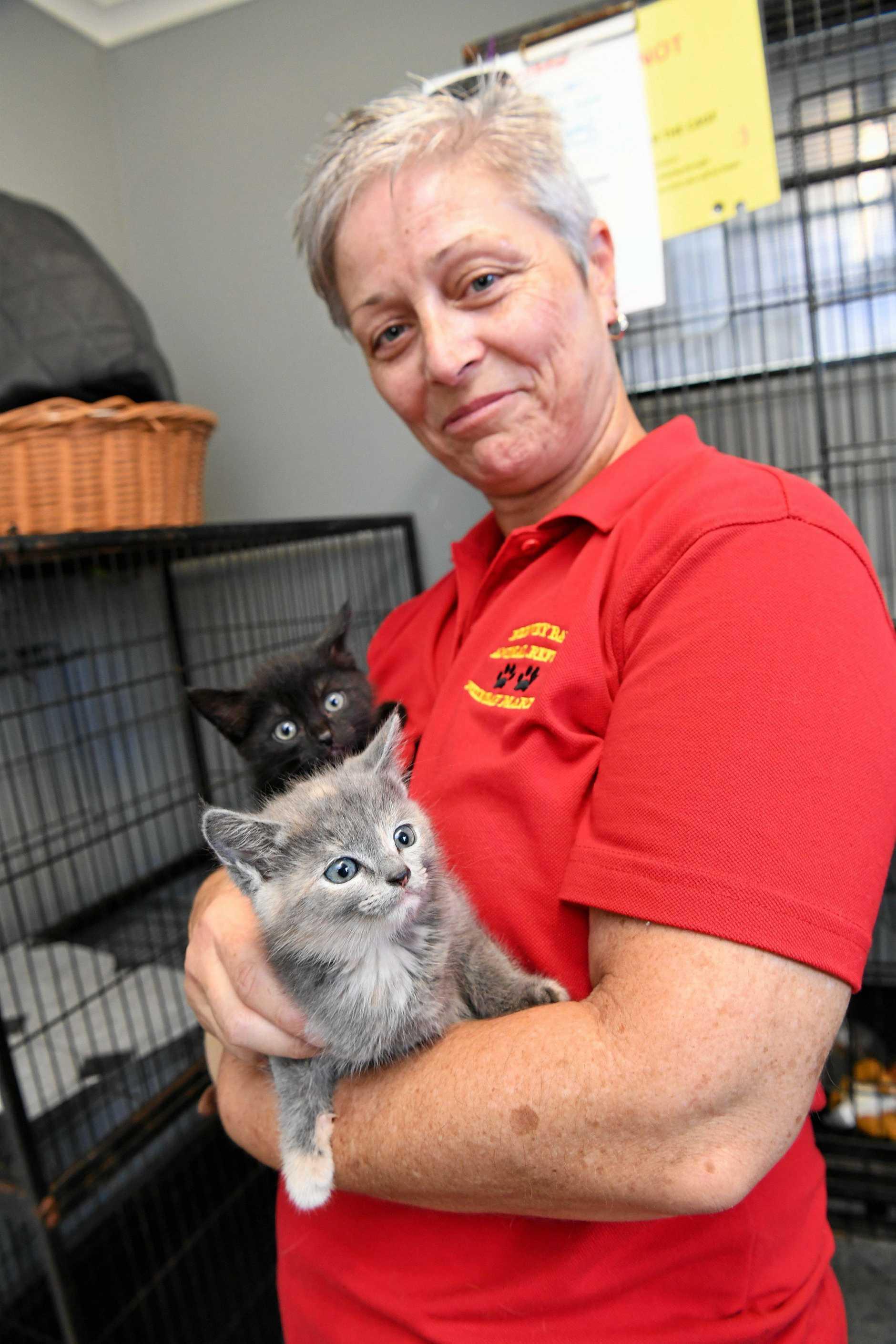Hervey Bay Animal Refuge - volunteer Mel Wilks with kittens Leonard and Penny (grey).