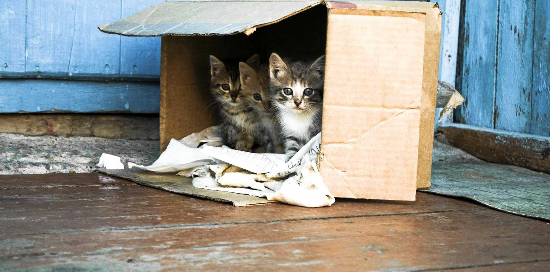 Hervey Bay Animal Refuge volunteer Mel Wilks is hoping the refuge's initiative of taking in puppies and kittens under three months of age for free, will help stop the animals being dumped.