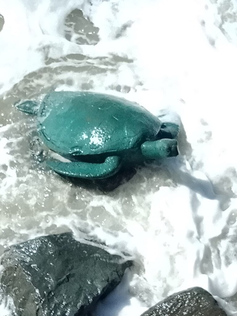 MISSING: A turtle was removed from its rock on a Yeppoon beach last weekend and locals are wondering 'where is he?'.