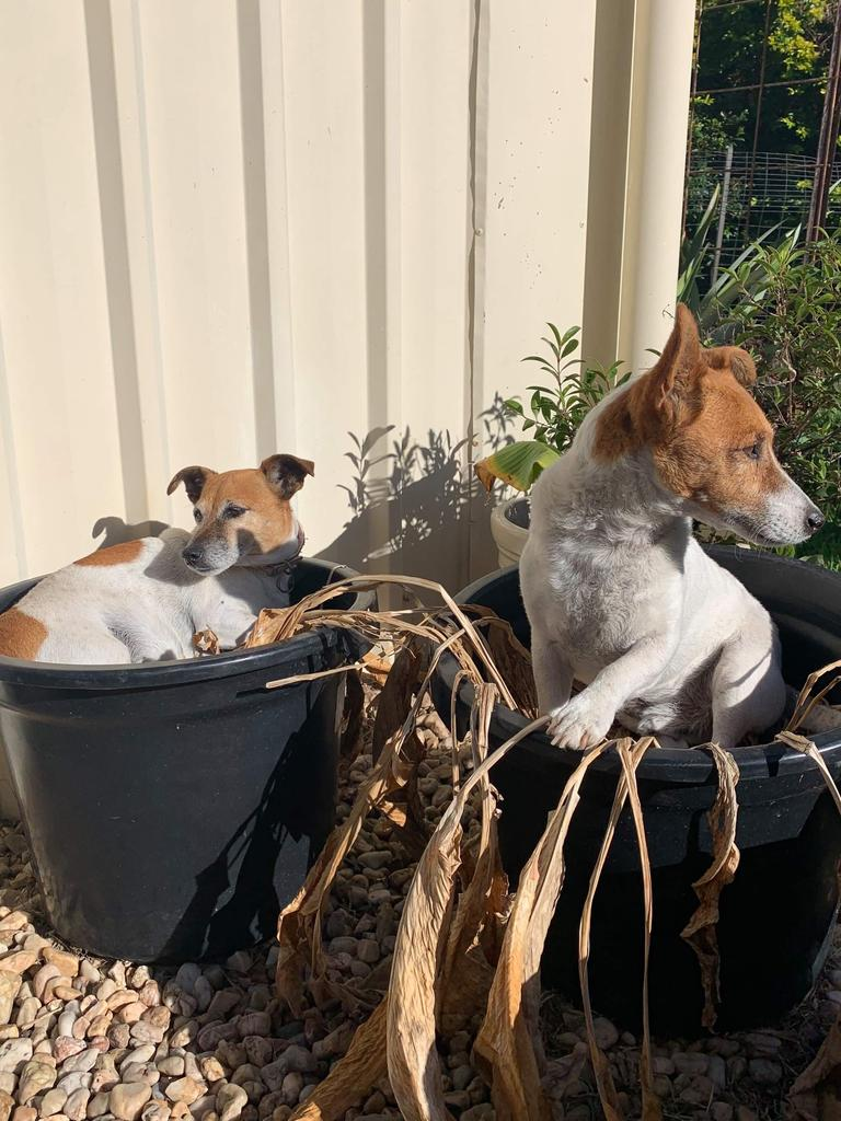 Jackie and Lucky loved sitting in the pot plants.