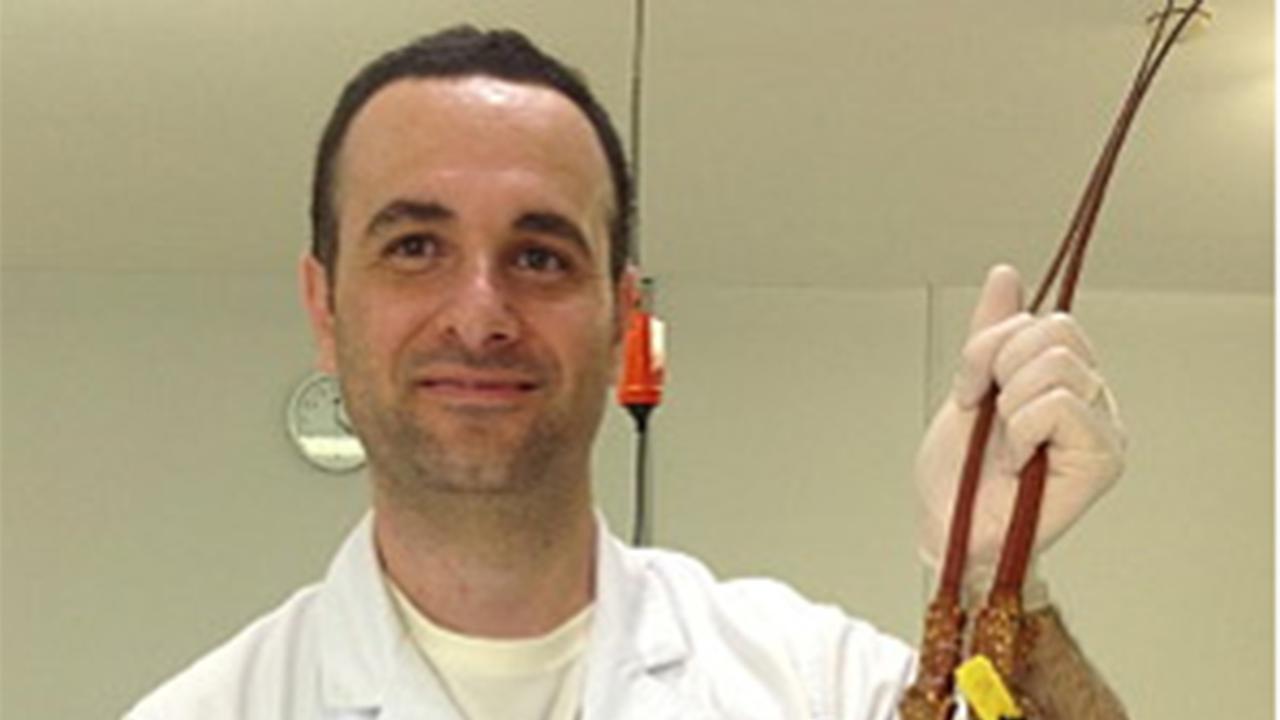 Dr Tomer Ventura holds a specimen of a rock lobster.