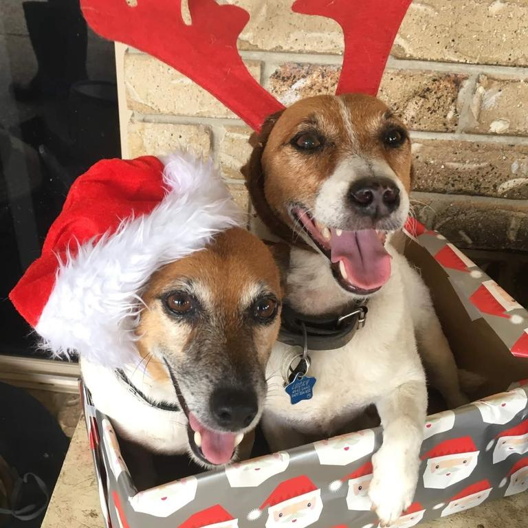 Jackie and Lucky dressed up for Christmas.