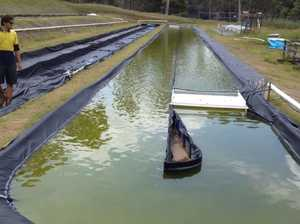 New algae farm could mean big bucks and 100 jobs for Ballina