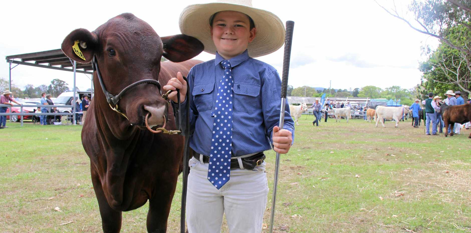 KYOGLE SHOW: Daniel Pryor, 10, is making sure the future of the Australian cattle industry was in good hands.