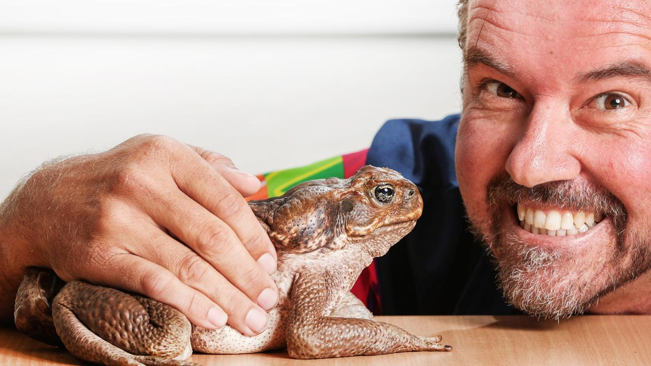 Al Mucci with Fifi the mammoth Cane Toad. Picture: NIGEL HALLETT