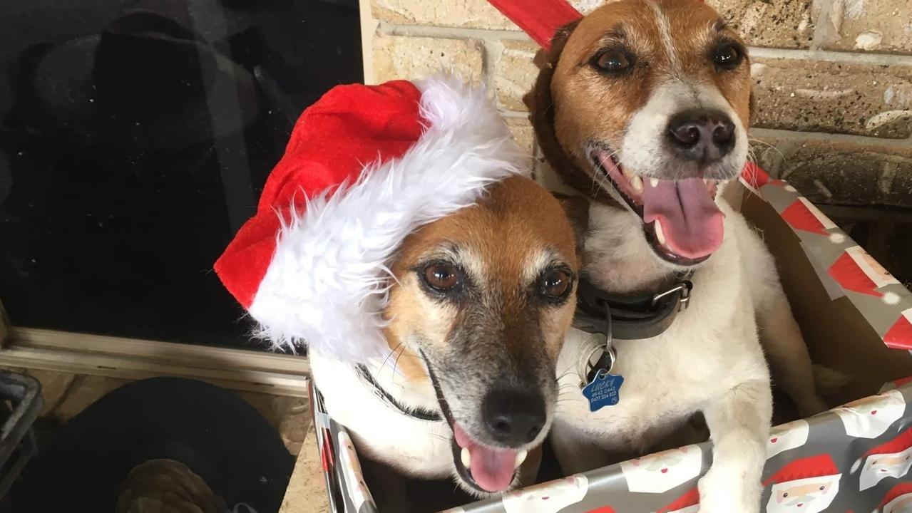 Jackie and Lucky died over the weekend in a suspected dog baiting incident at a Glenella home.