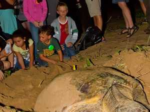 Nothing odd about turtle centre inquiry
