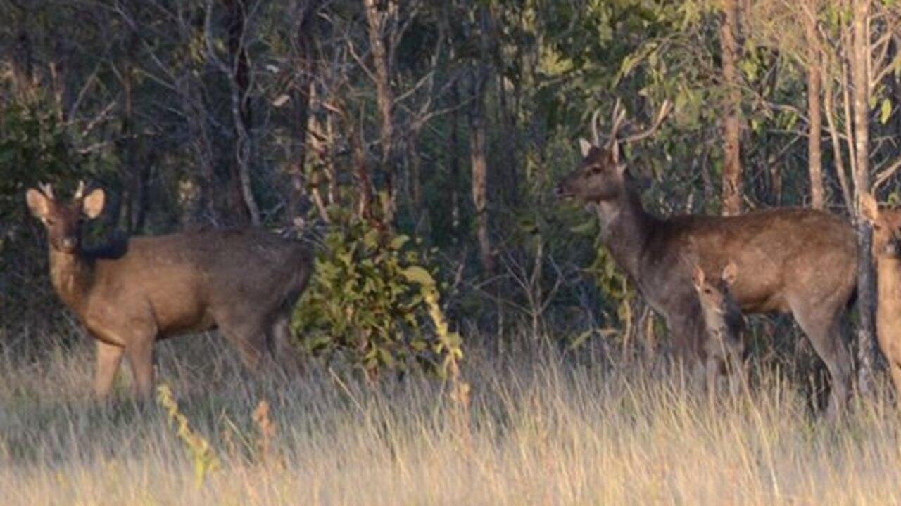 Sue Woodfield sent in this photo of deer in a paddock behind Lakes Creek School.