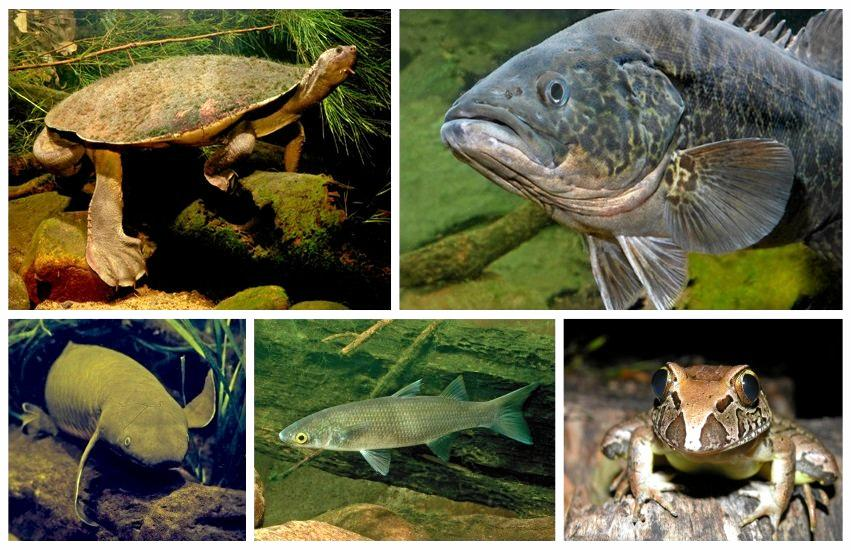 The Mary River endangered species.