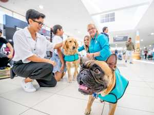 Airport's newest staff member is helping nervous flyers