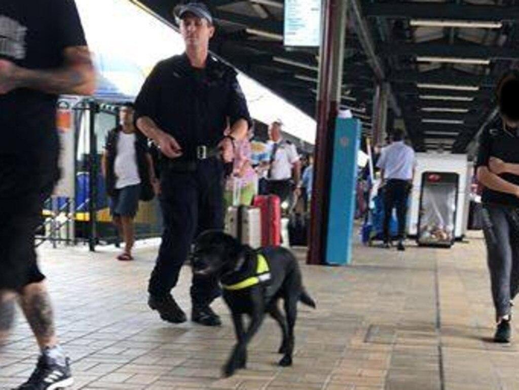 A police drug dog at Sydney's Central station.
