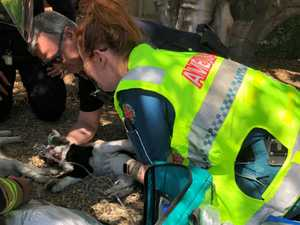 Amazing moment paramedics 'revive' kittens