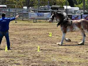 PHOTOS: Clydesdale bolts after being spooked at show