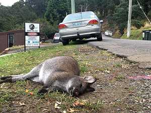 Why taking a photo of roadkill can save Aussie animals