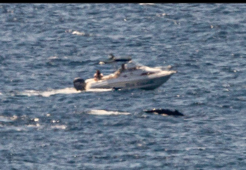 The boat was spotted metres from a whale and its calf off Point Arkwright.