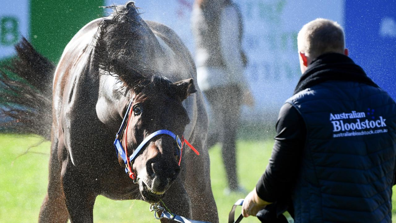Mustajeer is among the main chances in this year's Caulfield and Melbourne Cups. Picture: AAP