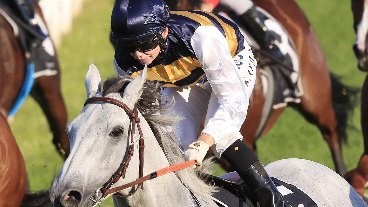 Grey Lion wins takes out the Lord Mayor's Cup in May.