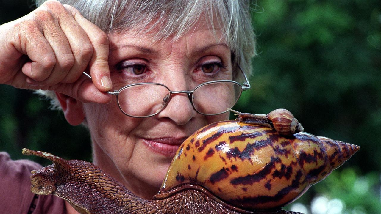 AQIS public awareness officer Kay Carvan looks at a Giant African snail on a model of a nearly fully grown one.