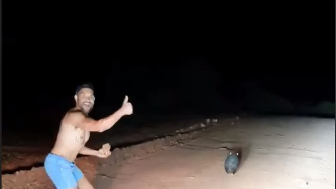 Waylon Johncock caught on camera chasing a wombat before stoning it. Picture: Wombat Awareness Organisation.