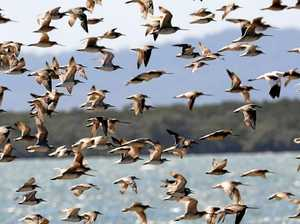 Spread your wings to learn about migratory birds